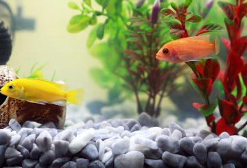 fish-961953_1280