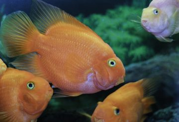 fish-975713_1280