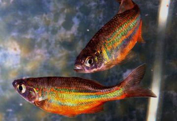 fish-774784_1280
