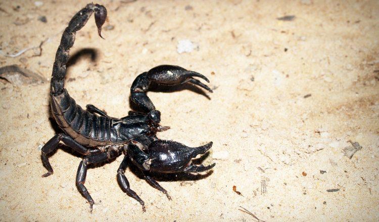 scorpion-931561_1280