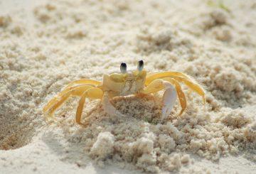 crab-215170_1280