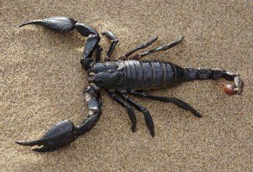 scorpion-651142_1280