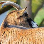 Personalidad de Capricornio  – La personalidad del zodiaco